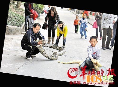 父子当街遛两百斤大蟒蛇(图)