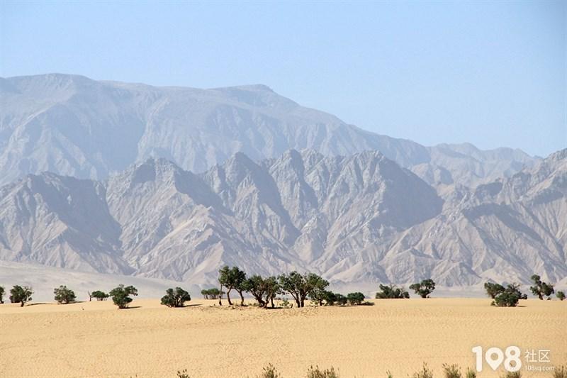 格尔木胡杨林 穿越青藏高原随记之三十二
