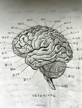美女大学生手绘人体解剖图走红 太逼真