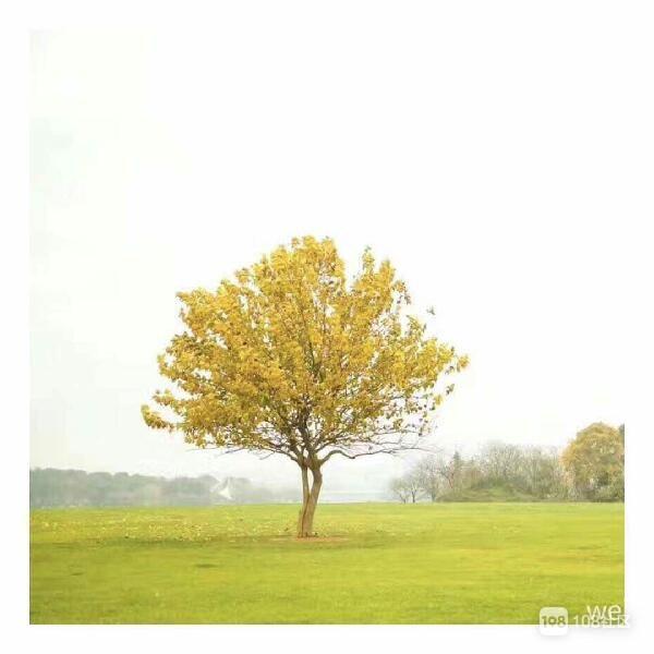 见证衢城春夏秋冬的树
