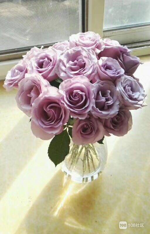唐 - 徐夤 - 司直巡官无诸移到玫瑰花 芳菲移自越王台,最似蔷薇好并