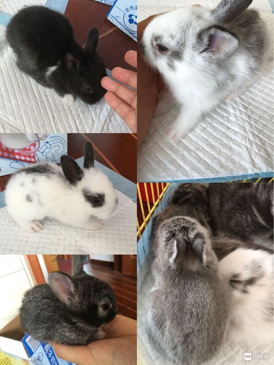 活泼可爱的小兔子预订