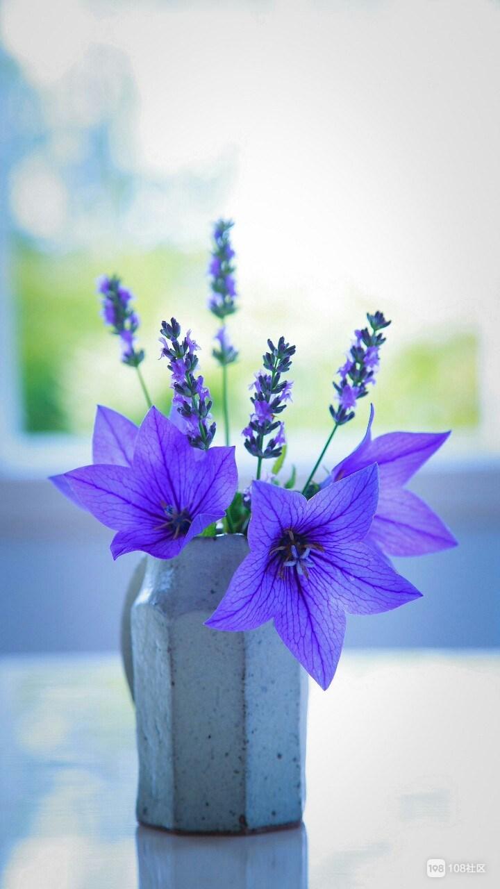 早晨鲜花风景图片