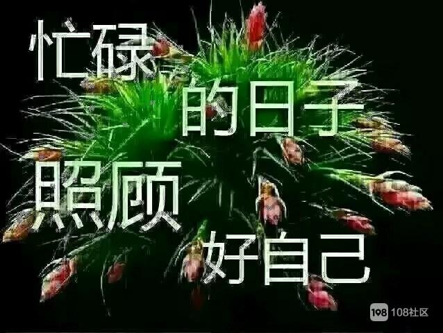 鲜花风景问侯动态闪图