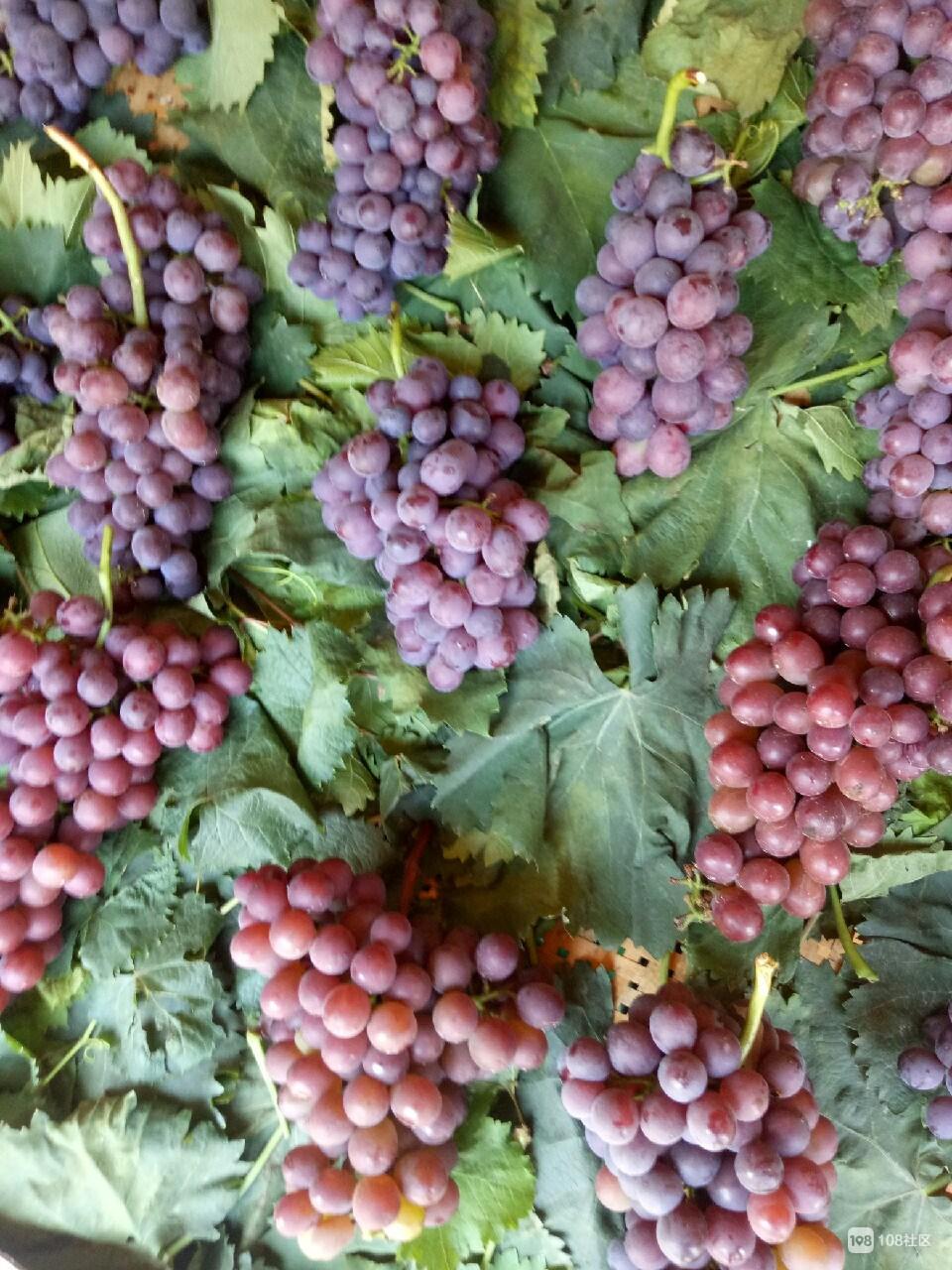 象皮泥手工制作葡萄
