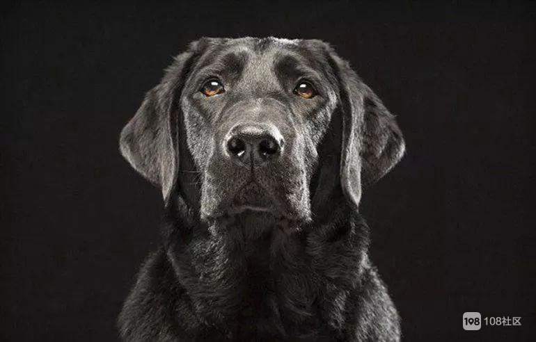 """开封""""症候黑狗群"""",黑狗了?照样很独特!国际瞎说好不好高中班图片"""