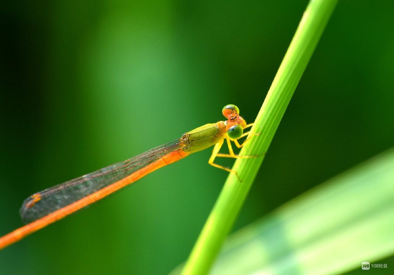 大自然的小精靈,微距攝影作品欣賞!