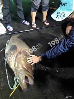 社友不满小鲫小鲤霸屏,东海游钓,不为吃鱼只求上头条