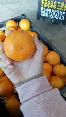 卖橘子啦!!!!!