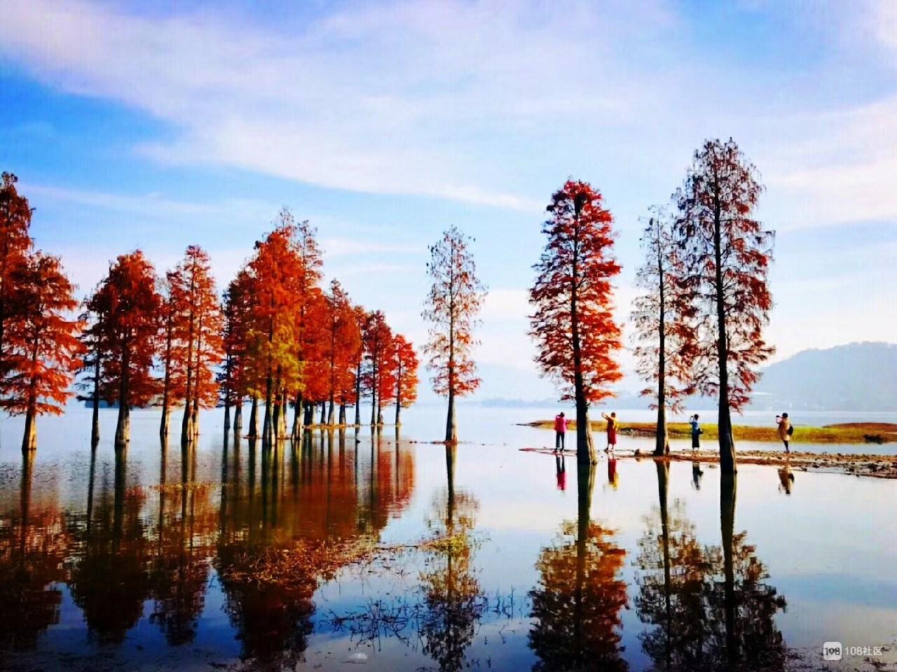 余姚四明湖红杉林美景图片