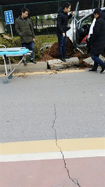 惊呆了:衢州女司机开车直冲水沟,一棵大树救下了她!