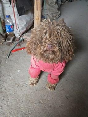 【转卖】出售宠物狗狗