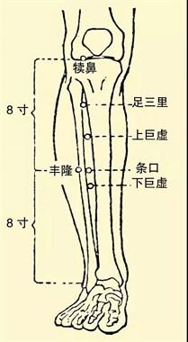 让身体一直年轻的3步曲 :通胃经、补脾经、摩关元