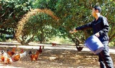 活的不如鸡!房东对他的鸡都比对我们好,无语…