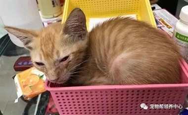 """自从小男孩从墙缝里救了只小橘猫后,老妈就中了""""猫毒""""…"""