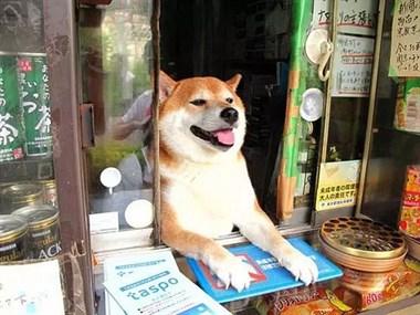 大德牧卖快餐,直接看傻来购买的顾客!