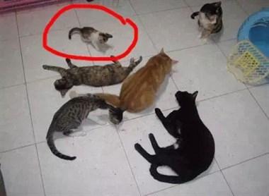 网友领养的小奶猫,在6年时间里发生惊人巨变,如今…