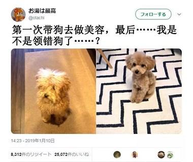 美容店接回狗,结果一脸懵逼:我领错狗了?