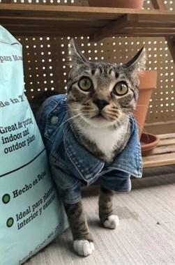 网友买了一件超迷你牛仔衣,自家主子穿上后,帅一脸!