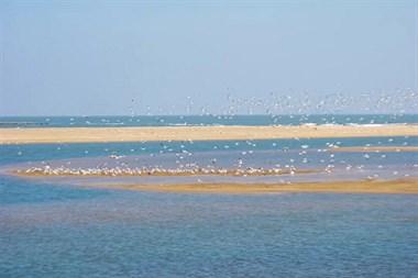 错过等一年!这是天鹅冬日栖息的纯净仙境,也是离我们最近的童话世界