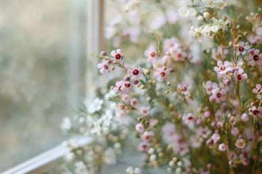 那些像桃花一样美丽的日子