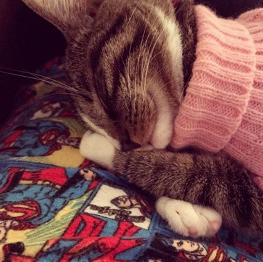 穿上了毛衣的可爱猫咪们