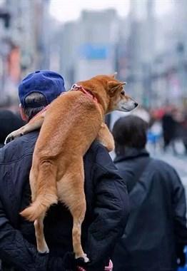 趁狗狗还小能多抱抱就抓紧,不然长大后...
