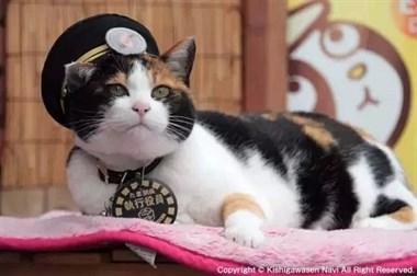 贵志站迎来新的猫站长!老站长曾拯救了整个车站...