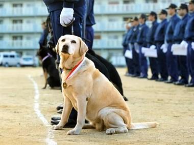 这只狗狗,连续6年考警犬都失败了,却因此收获了大批粉丝...