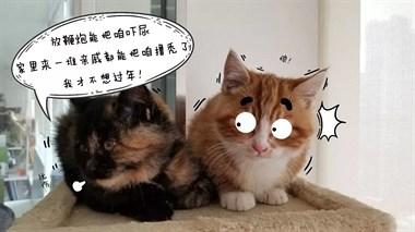 猫都被你们玩坏了,猫砂盆都要贴春联?