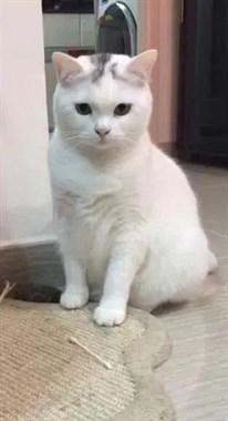 猫到中年,竟然也有这样的烦恼?!
