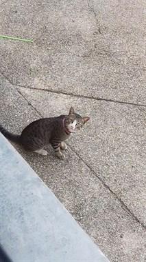 偷拍一只猫被发现,差点吓死...