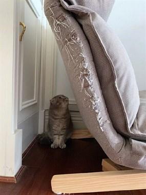 养猫的人,不配拥有沙发!