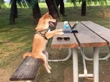 零食遛弯都叫不动狗,唯一能吸引它的居然是屁股?