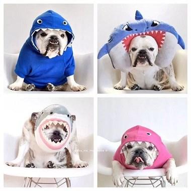 11个狗狗的可爱动物装