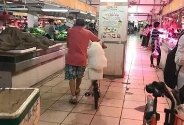 有一种狗,叫爷爷养的狗