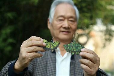 银杏叶可以这样玩?上虞75岁老人将银杏叶变为翩翩蝴蝶