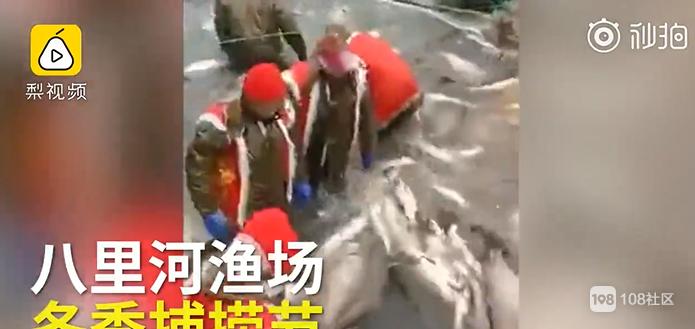 1万元1斤!安徽渔场冬捕10条大鱼,竞价拍出300万元
